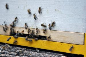 Bienenstände